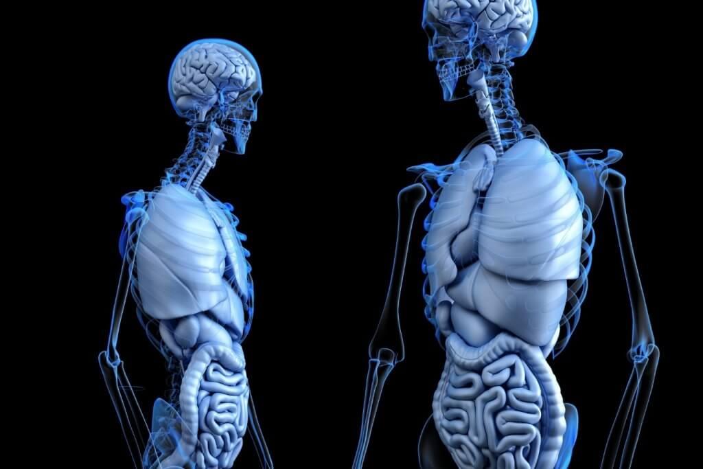Человеческие кости состоят из воды: