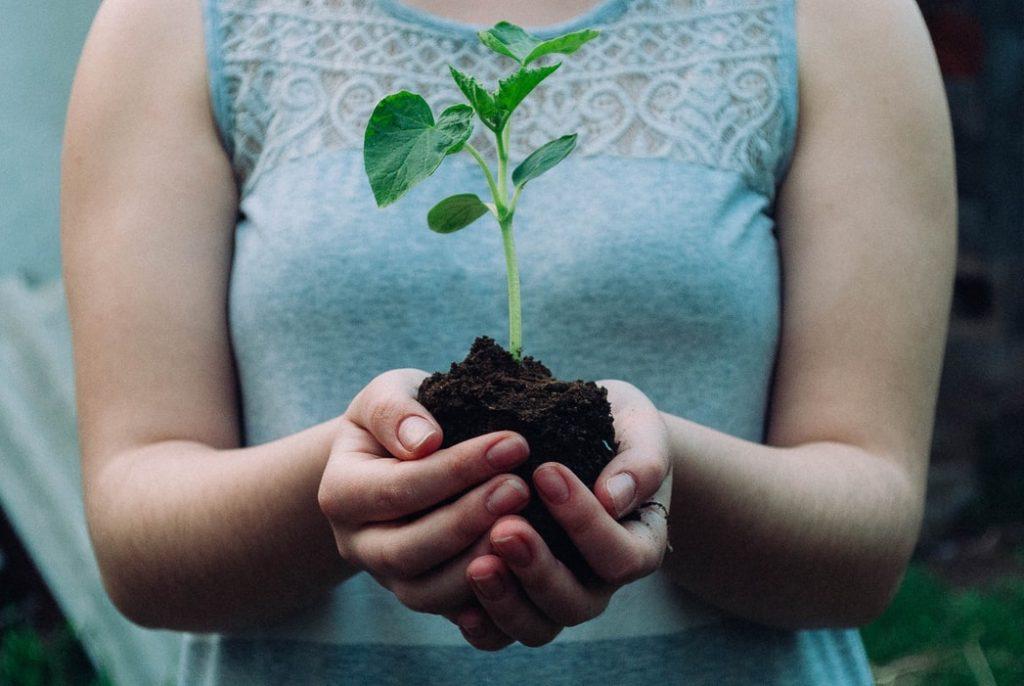 сажать деревья для загрязнения воды